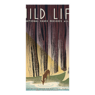 Wild Life - The National Parks preserve all Life. Card