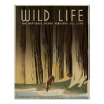 Wild Life Vintage 1940 National Park Service Posters