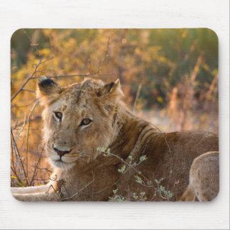 Wild Lioness - Mousepad
