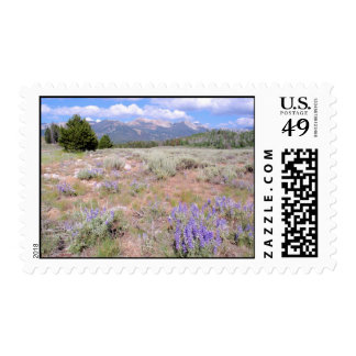 Wild Lupin in the Idaho High Desert. Postage