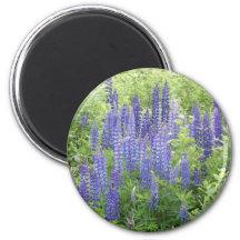 Wild Lupine Magnet
