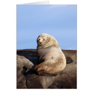 Wild Male Steller Sea Lion Greeting Cards