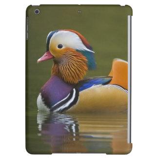 Wild Mandarin Duck Aix galericulata) on dark Case For iPad Air