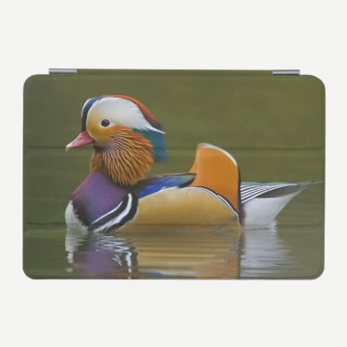 Wild Mandarin Duck Aix galericulata) on dark iPad Mini Cover