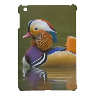 Wild Mandarin Duck Aix galericulata) on dark iPad Mini Covers
