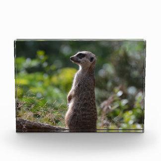 Wild Meerkat Award