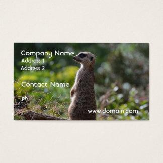 Wild Meerkat Business Card