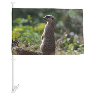 Wild Meerkat Car Flag