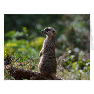 Wild Meerkat Card