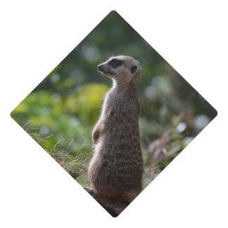 Wild Meerkat Graduation Cap Topper