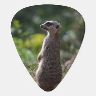 Wild Meerkat Guitar Pick