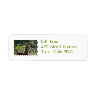 Wild Meerkat Label