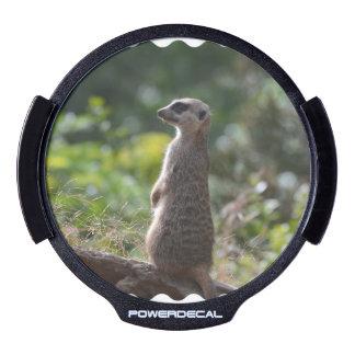 Wild Meerkat LED Car Decal
