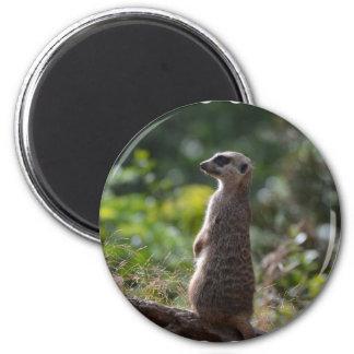 Wild Meerkat Magnet