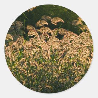 Wild Millet (Panicum Sp.) Growing In Wetland Classic Round Sticker