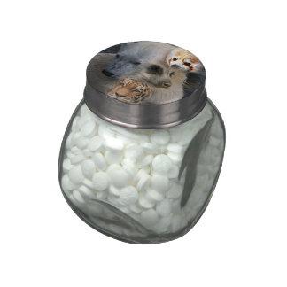 wild Mix 1 Glass Candy Jars
