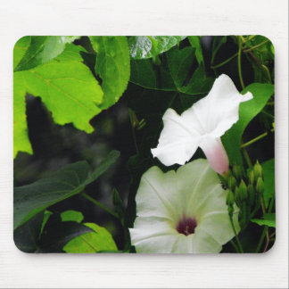Wild Morning Glories Mouse Pad