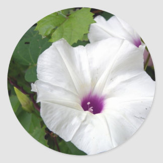 Wild Morning Glory-2010 Sticker