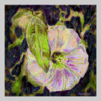 Wild Morning Glory by Alexandra Cook posters