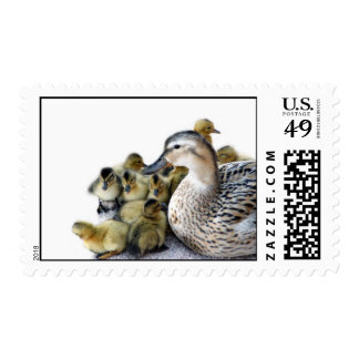 Wild Mother Duck and Ducklings Postage Stamps
