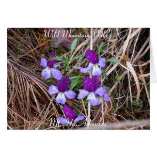 Wild Mountain Viola's, Mt. Ida, Arkansas Card