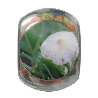 Wild Mushroom Jelly Belly Candy Jar
