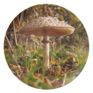 Wild mushroom party plates