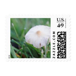 Wild Mushroom Stamp