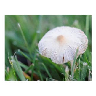 Wild Mushroom Postcard