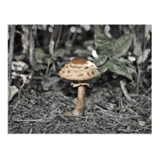 Wild Mushroom (Toadstool) Postcard