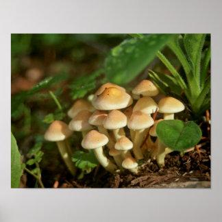 Wild Mushroom Toadstools Poster