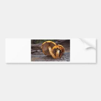 Wild Mushrooms Bumper Sticker