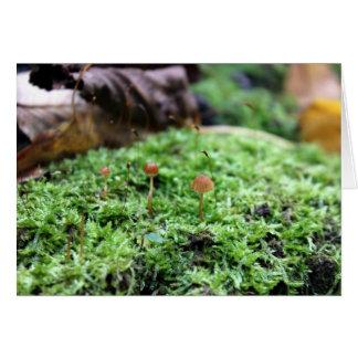 Wild Mushrooms Card
