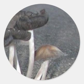 Wild Mushrooms Classic Round Sticker