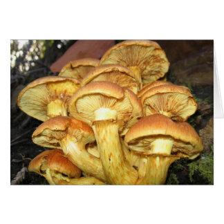 Wild Mushrooms, Gymnopilus junonius - Card