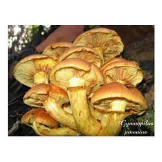 Wild Mushrooms, Gymnopilus junonius Postcard