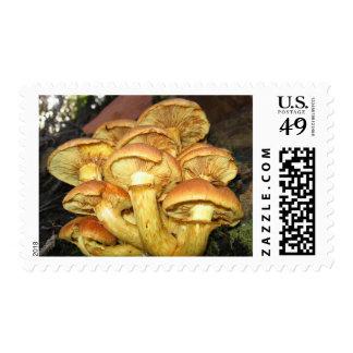 Wild Mushrooms, Gymnopilus junonius - Stamp
