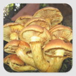 Wild Mushrooms, Gymnopilus junonius - Sticker