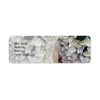 Wild Mushrooms Custom Return Address Labels