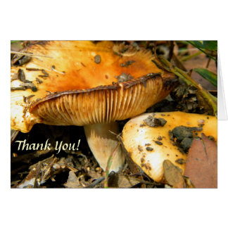 Wild Mushrooms Note Card