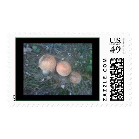 wild mushrooms photo postage stamp