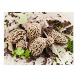 Wild Mushrooms, postcard