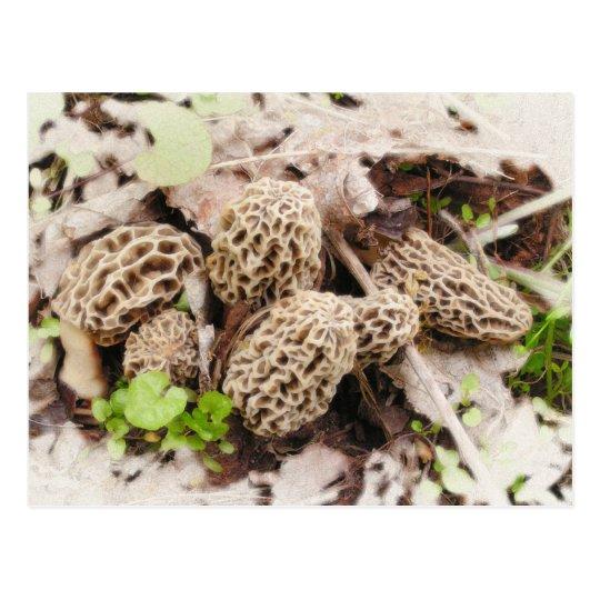 Wild Mushrooms, postcard