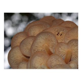 Wild Mushrooms Postcard