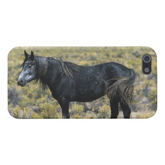 Wild Mustang Horse in the Desert Case For iPhone SE/5/5s