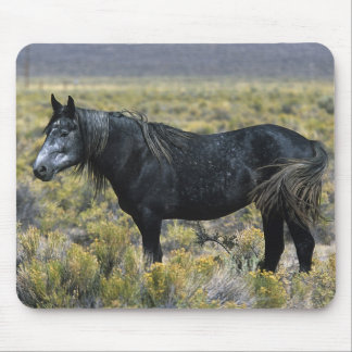 Wild Mustang Horse in the Desert Mouse Pad