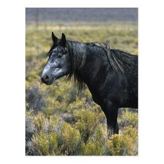 Wild Mustang Horse in the Desert Postcard