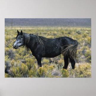 Wild Mustang Horse in the Desert Poster