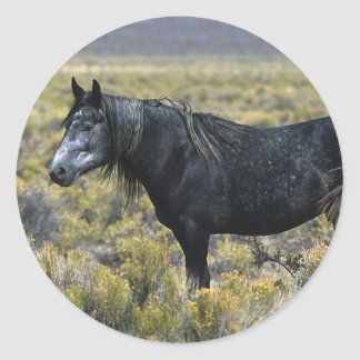 Wild Mustang Horse in the Desert Round Stickers