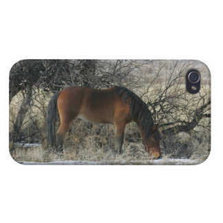 Wild Mustang Horse in the Snow 1 Covers For iPhone 4